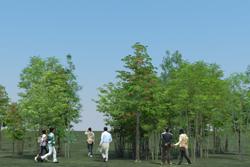 8_tree_billboard_01.jpeg