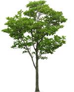 8_tree_billboard_04.jpeg