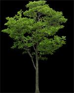 8_tree_billboard_05.jpeg