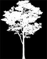 8_tree_billboard_06.jpeg