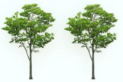 8_tree_billboard_07.jpeg