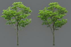 8_tree_billboard_08.jpeg