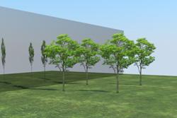 8_tree_billboard_13.jpeg