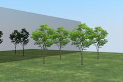 8_tree_billboard_15.jpeg