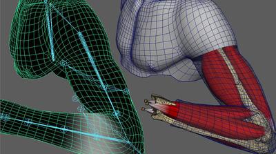 Mayaパーフェクトスキニングウェビナー~美術解剖学に基づくロジカルスキニング講座~